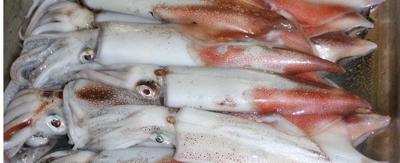 Sustainable Cape Squid