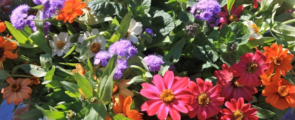 PageLines- Flowers.jpeg