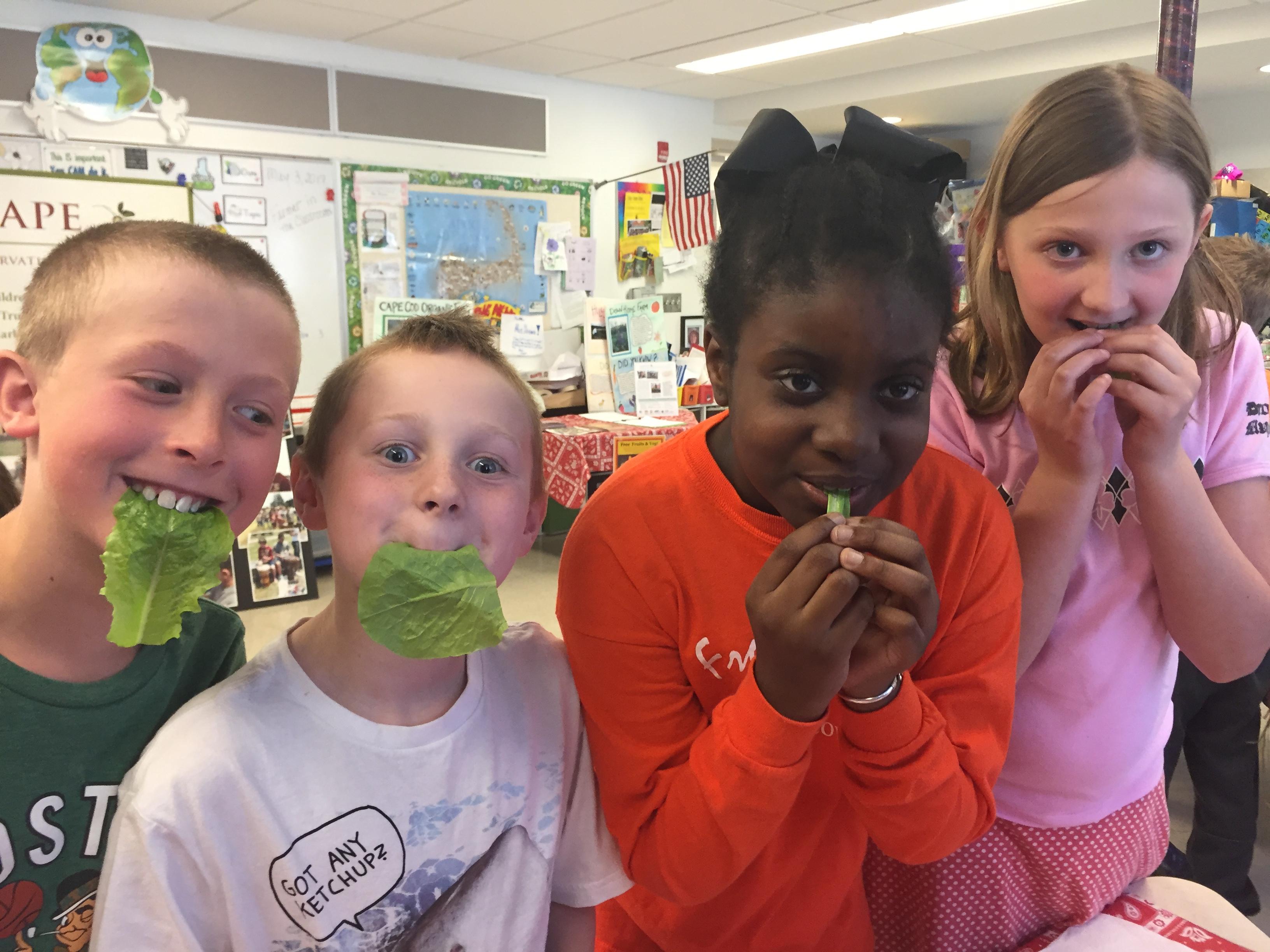 Kids eating lettuce